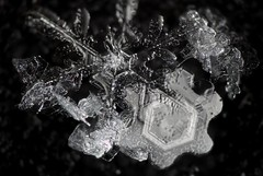 17jan18L2 (peterobrien186) Tags: glassy glass plates snow snowflake snowcrystal crystal winter macro dendrite fragile contrast blackandwhite bw sky white digital camera new