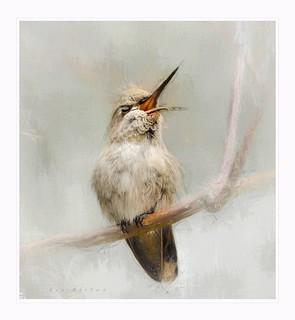 Singing hummingbird