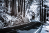 the open road (greg westfall.) Tags: pointreyes monterrey gregwestfall pines california northerncalifornia infrared 720nm highway windingroad