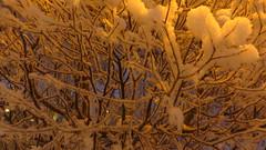 IMG_4379 (Mr Thinktank) Tags: raureif frost
