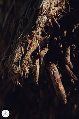 Photography | Light (Savannah Katarina) Tags: photography course design school academy basic basics element elements portrait composition light lighting low key black nature natural wildlife bee flower flowers sky skies model contrast
