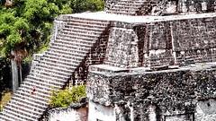 Tikal, Pyramide (gerard eder) Tags: world travel reise viajes america centralamerica mittelmeer guatemala yucatán tikal pyramiden pyramides maya mayatemples mayapyramides paisajes panorama landscape landschaft natur nature naturaleza outdoor temple templos tempel geology geologie geologia culturalsites architecture architektur arquitectura historic historicsites