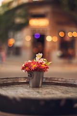 (ninasclicks) Tags: flowers bokeh dof urban city street citylights streetphotography