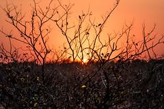Savana (marcosorrentino.arch) Tags: johannesburg sudafrica kruger parchi sole savana