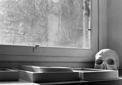 La Morte e La Luce (Eleni Maitou) Tags: analogue canon canonae1 bnw blackwhite monochrome scull window film noir 35mm