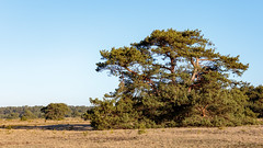 _Z1A3205 (doevos) Tags: hogeveluwe npdhv nationaalparkdehogeveluwe veluwe wandelfit