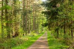 Wald im Frhling (c.collardjacques) Tags: wald natur landschaft naherholung grün naturschutz naturschutzgebiet frühling norddeutschland deutschland idylle sommer umwelt weg grn frhling germany