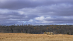 three and a quarter (rockinmonique) Tags: sky hay harvest haybales stormy blue grey gold green alberta luminosity moniquew canont6s canon tamron tamron70300mm copyright2018moniquewphotography