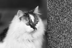 0704 Behind The Wall (Hrvoje Simich - gaZZda) Tags: blackwhite monochrome outdoors noperson portrait nikon nikond750 sigma150500563 gazzda hrvojesimich