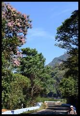 Scenic Walk (Indianature st2i) Tags: valparai anamalais anamallais anamalaitigerreserve westernghats tea shola rainforest nature indianature 2018 january february tamilnadu india life wildlife plantation forest people estate