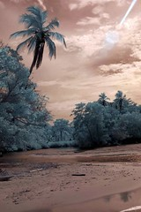 Infrared Cahuita National Park (342) (Beadmanhere) Tags: costa rica cahuita national park infrared