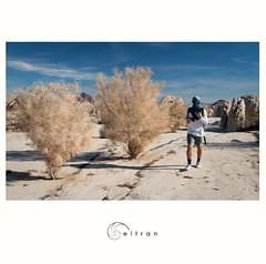 Joshua Tree (Arturo Beltran) Tags: joshuatree desert hiking california travel
