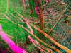 20171231-030 (sulamith.sallmann) Tags: landschaft natur bayern blur bunt bäume colorful deutschland effect effekt ellertal filter folie folientechnik forest franken germany landscape nature reflektion reflexion spiegelung trees unscharf wald deu sulamithsallmann