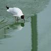 (Laetitia.p_lyon) Tags: fujifilmxt10 mouette gull seagull bird oiseau
