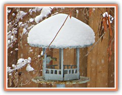 Snow Hat (bigbrowneyez) Tags: metal birdfeeder snow winter neve snowstorm snowflakes mygarden miogiardino wisteriaarch leaves fence sepa bird snowhat branches nature natura dof frame cornice cold whiteicing seeds wisteriapods