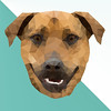 Dog (fiona nicole c) Tags: low poly graphic design art animal photoshop