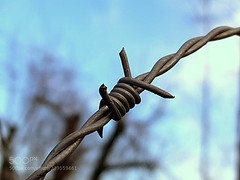 Barbed wire fence detail (tycampbe) Tags: ifttt 500px wire freedom hope abstract silhouette love pray blue sky makro minimalism detail decoration effect pure popular special barbed fence