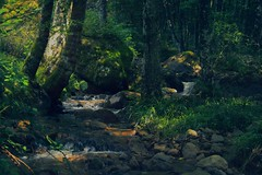 luci nel bosco (f4b1u5) Tags: woodland forest sunrays greencolor waterfall water hiking foliage trees lights nature naturephotography outdoors