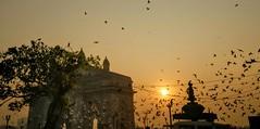 Early commuters..... (Onlyshilpi) Tags: sunrise seagull birds gateway mumbai