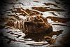 Jamina (Noodles Photo) Tags: zwergflusspferd pygmyhippopotamus jamina choeropsisliberiensis mammal säugetier tierkinder hippopotamidae paarhufer canoneos7d ef24105mmf4lisusm zooduisburg duisburg zoo nordrheinwestfalen northrhinewestphalia deutschland germany