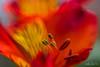 Spirale de feu...! - Spiral of fire ...! (minelflojor) Tags: pollen stem macro bokeh nature blur yellow net stigma anther fade fleur pétale tige flou jaune filet stigmate anthère fondu