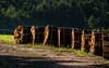 Westweg Etappe 9 | 20 (Wolfgang Staudt) Tags: westweg schwarzwald fernwanderweg pforzheimbasel etappe9 kalteherberge lachenhaeusle glashoefe schweizerhof tuerkenlouisschanze hoehenwanderweg heiligenbrunnen titisee fahrenberg natur wald mittelgebirge wanderweg badenwuerttemberg deutschland wandern aussichtsreich waldweg