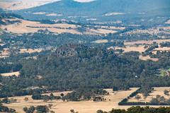 20180122-IMG_5461.jpg (tastigr) Tags: australia afternoon victoria macro wildlife macedonranges summer