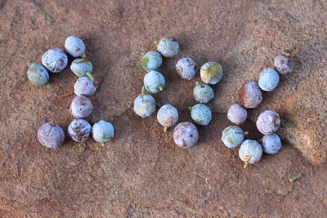 106 Juniper Berries