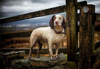 Rupert on Crompton Moor