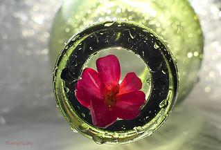 Little Flower .. In a Bottle ...