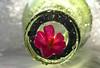Little Flower .. In a Bottle ... (MargoLuc) Tags: macromondays theme inabottle pink flower green bottle bokeh natural light petals backlight droplets