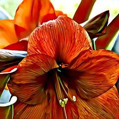 Red Amaryllis (GeminEye27) Tags: artisto amaryllis pixelbenderoilpaint topazclean