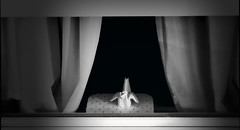 Paper neighbour (mathieu.lamoureux) Tags: blackwhite neighbour window paperbird origami eos100d canon 50mmf18