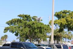 IMG_0636 (City of Weston) Tags: weston civics highschool education cga civilengineer planning traffic landscape