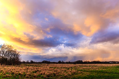 Wanstead Flats (PhredKH) Tags: canon canon5dmkiii canoneos canoneos5dmkiii fredkh goldenhour grass greenlondon london parkland photosbyphredkh phredkh splendid trees twilight urbanpark cityoflondon outdoorphotography sky wanstead wansteadflats sunset animal field landscape