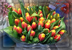 Tulipanes de febrero. Para Pilar (Valerio_D) Tags: tulipanes tulipani bologna emilia emiliaromagna italia italy 20172018inverno tulips fiori fiore flower flowers flores flor 1001nights 1001nightsmagiccity