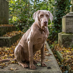 LR London 2017-300141 (hunbille) Tags: birgittelondonoktober20173lr london england nunhead cemetery magnificentseven magnificent seven victorian autumn fall allsaintscemetery all saints dog challengeyouwinner cyunanimous cy2