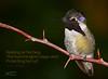 Daily Haiku: Hummingbird  - 054/365 (James Milstid) Tags: dailyhaiku haiku haiga poetry jemhaiku hummingbird