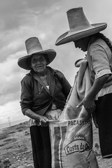 04 (Lechuza Fotografica) Tags: verde cajamarca peruvian farmers agricultores