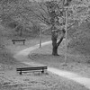 Pair of benches (Denkrahm) Tags: denkrahm fujixpro1 germany deutschland trier monochrome tree benches twobenches twoemptybenches path desolate solitude empty lonely