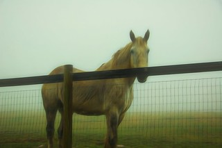 Foggy Mountain Horse