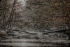 d'inverno nel bosco (66Colpi) Tags: bosco lafagiana magenta pontevecchio natura inverno nebbie neve gelo freddo torrente ticino parcodelticino lombardia