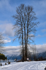 Grant Narrows Regional Park (Winter 2018) (SonjaPetersonPh♡tography) Tags: pittmeadows pittlake pittpoulder grantnarrowsregionalpark 2018 winter snow winterscene nature park regionalpark bc bcparks britishcolumbia canada nikon nikond5300 boating pittriver marina mountains landscape mountainlandscape forest wildlife clouds reflections waterreflections snowscape