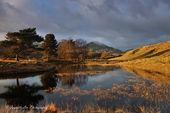 Golden Light (jeanette_lea) Tags: sunset lowlight kelly hall tarn coniston old man torver the lake district cumbria water reflections trees grass fells sky clouds snow