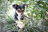 Daisy (Vinicius_Ldna) Tags: 6316 dog pet care caress srd viralata cachorro cão daisy bola bolinha ball green verde jardim backyard canon 50mm 50tinha londrina brazil