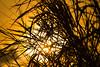 Sunset & silhouette (juansoto92) Tags: silhouettes siluetas sunset atarcedecer bucaramanga formas