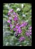 Duke Gardens July 2015 9.04.13 PM (LaPajamas) Tags: nc flora dukegardens gardens
