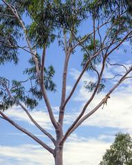 008513-_C282300 (aussiephil1960) Tags: em1mk2 em1markii tree