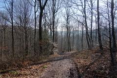 DSC08639 (Bike and hiker) Tags: jalhay hertogenwald gileppe