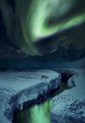 Midnight Rambler (tothfrantisek) Tags: surreal auroraborealis northernlights landscape wolf reflection snow ice
